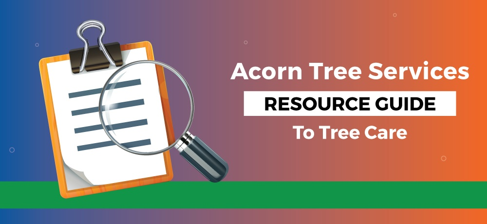 A-Resource-Guide-To-Tree-Care-Acorn Tree Services.jpg
