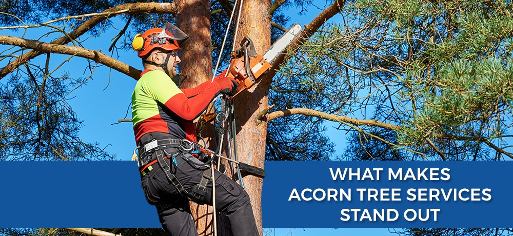 What-Makes-Acorn-Tree-Services-Stand-Out.jpg