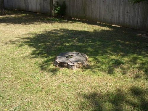 Stump Removal Gallery