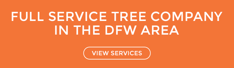 tree service company Dallas