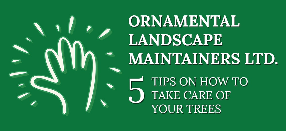 Five Tips On How To Take Care Of Your Trees-Ornamental Landscape Maintainers Ltd.jpg