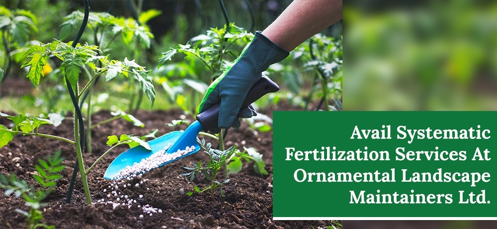 Systematic Fertilization Services At Ornamental Landscape Maintainers Ltd..jpg