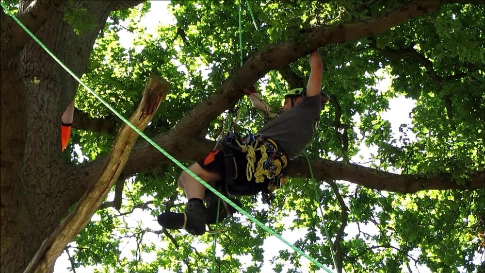 ISA Certified Arborist in Calgary, AB climbing a Tree at Ornamental Landscape Maintainers Ltd