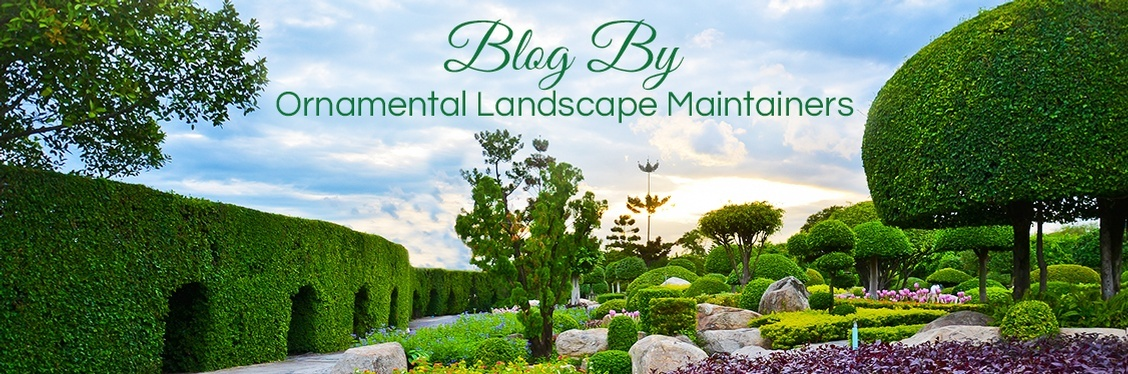 Blog by Ornamental Landscape Maintainers Ltd..jpg