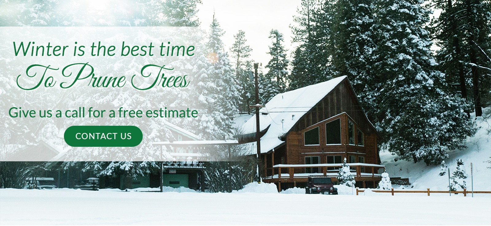 Winter is the Best Time to Prune Trees - Tree Pruning Services in Calgary by Ornamental Landscape Maintainers Ltd.