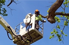 Tree Removal Services by Ornamental Landscape Maintainers Ltd. - Arborist in Calgary AB