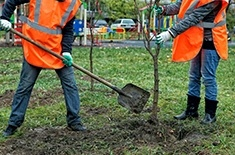 Tree Planting Services by Ornamental Landscape Maintainers Ltd. - Arborist in Calgary AB