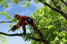 Arborists Services in Calgary, AB by Isa Certified Arborist at Ornamental Landscape Maintainers Ltd.