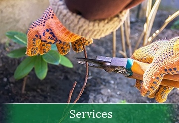 Shrub Pruning Services in Calgary AB by Ornamental Landscape Maintainers Ltd.