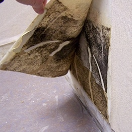 Mold Remediation Edmonton