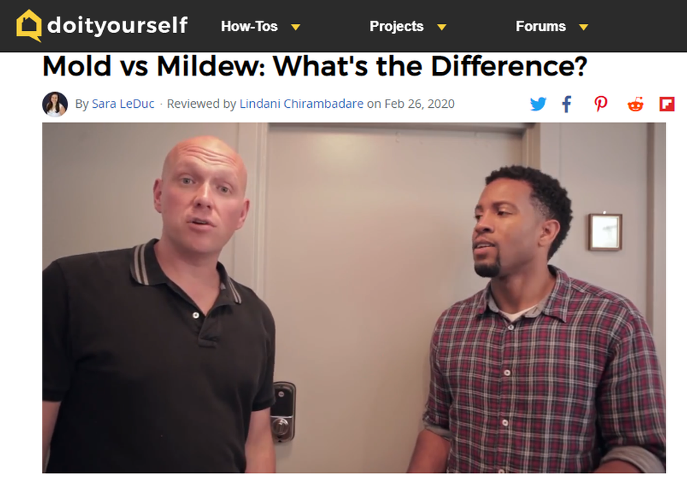 Mold vs Mildew  What s the Difference    DoItYourself com.png