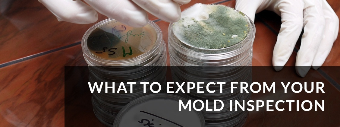 mold inspection niagara