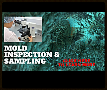 Mold Inspection in Edmonton