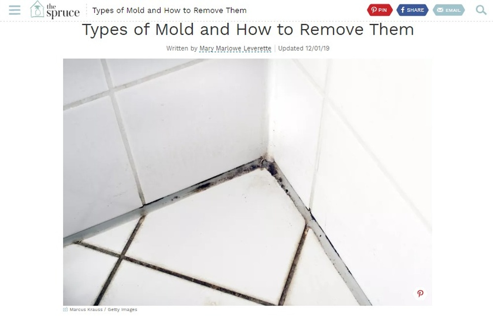 The Different Types of Mold and How to Remove Them.jpg