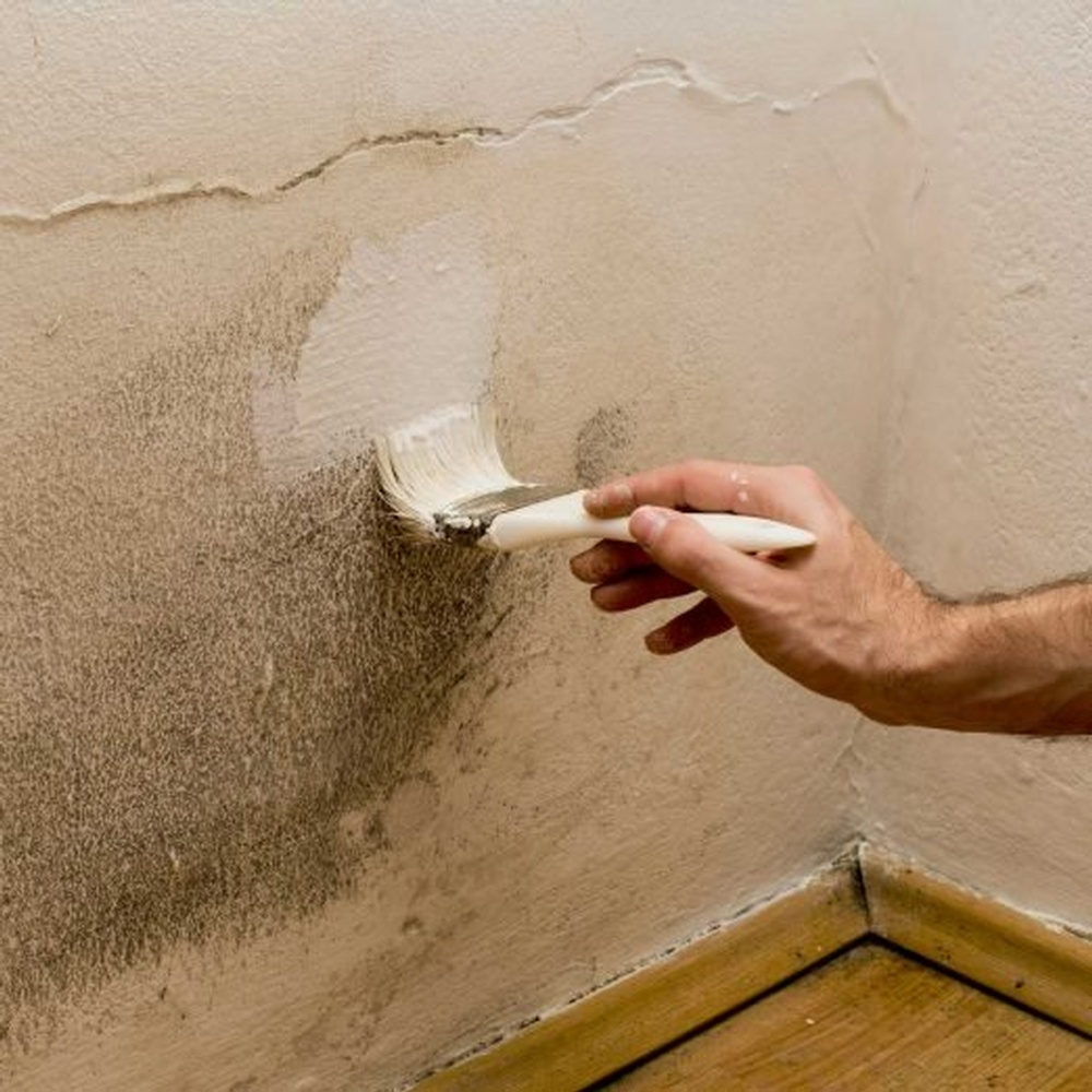 painting-mold-GettyImages-526689975-522x522.jpg