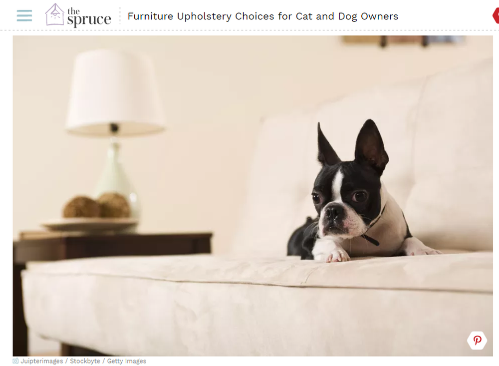 Couch Upholstery Choices for Cat and Dog Owners.png