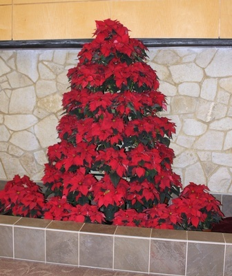 Creative Christmas Tree - Holiday Decorating Services Amherst by Tout Le Monde Interiors