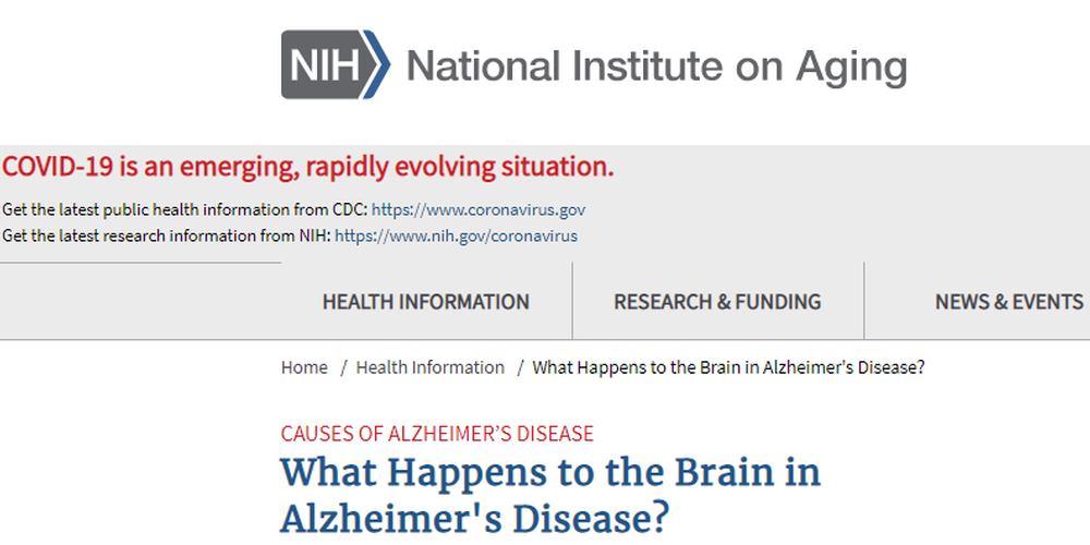 What Happens to the Brain in Alzheimer s Disease .png