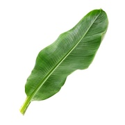 Buy Frozen Banana Leaves Online at Fresh Start Foods - Specialty Products Ontario