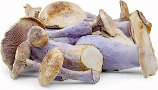 Buy Mushrooms Online at Fresh Start Foods - Specialty Products Alberta