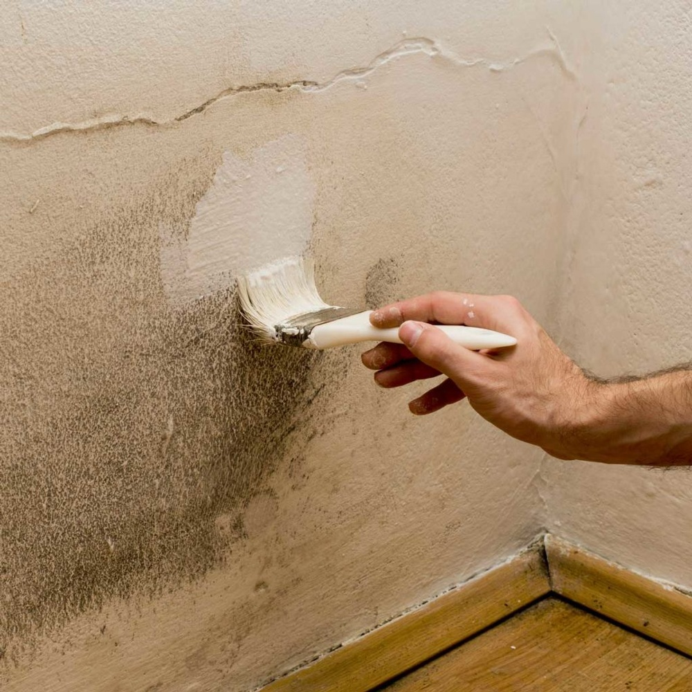 painting-mold-GettyImages-526689975-1024x1024.jpg