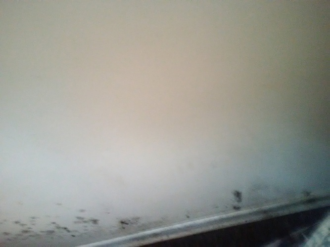 Mould Remediation Kitchener ON