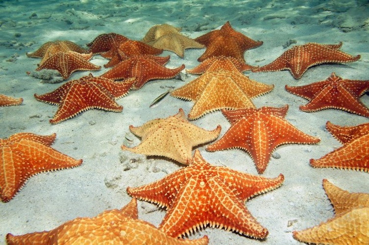 Romance with the Starfishes at the Dominican Republic with My Wedding Away Honeymoon Packages