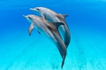 Bahamas Destination Wedding & Vow Renewal with Dolphins