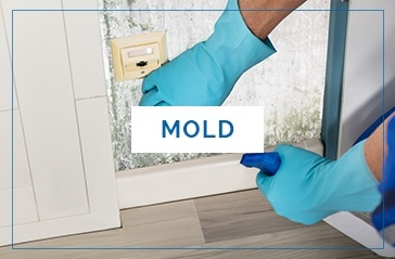 Mold Inspections Washington DC