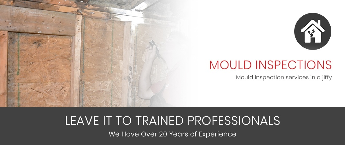Mould Inspection London