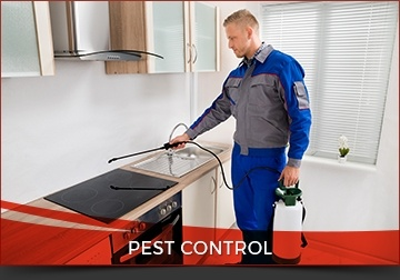 Affordable Pest Control Toronto