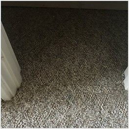 Rug Cleaning Edmonton