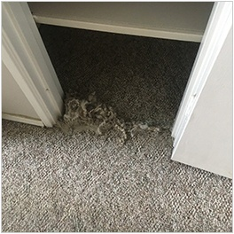 Carpet Cleaning Sherwood Park
