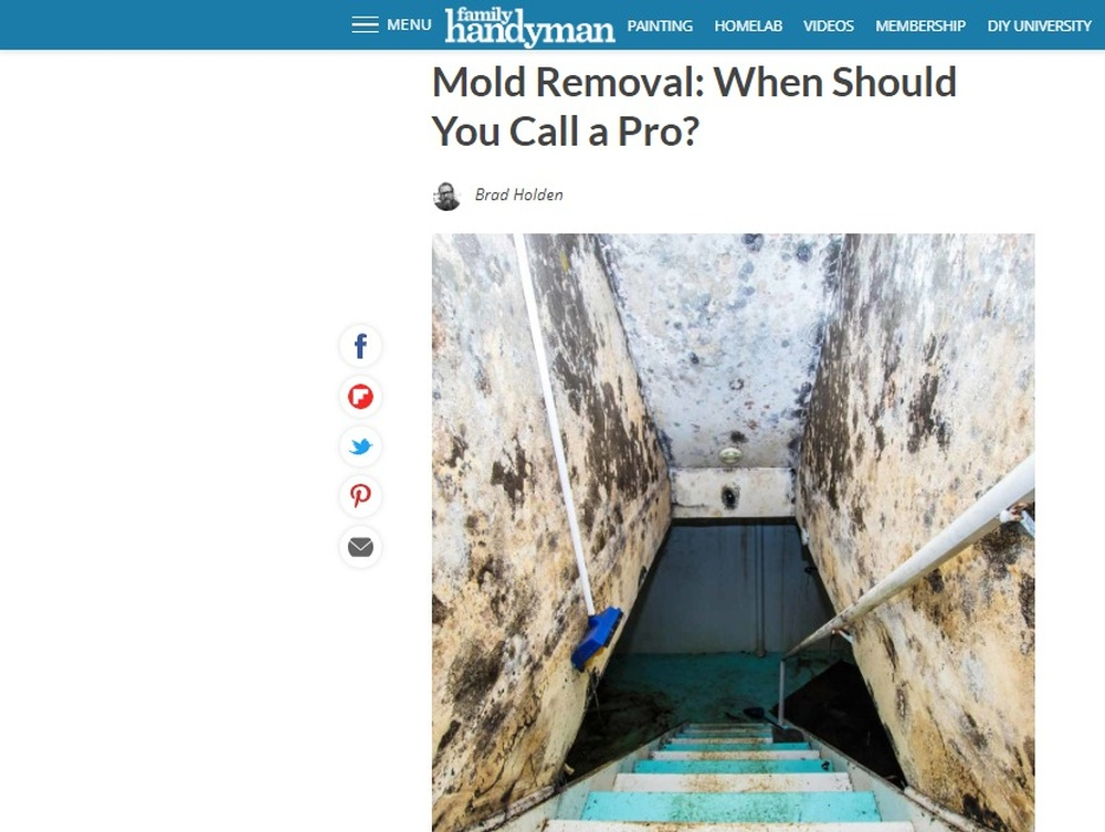 Mold Removal  When Should You Call a Pro    The Family Handyman.jpg