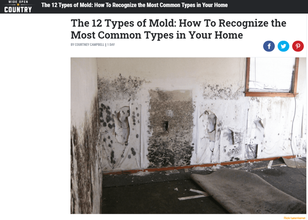 The_12_Types_of_Mold_How_to_Recognize_the_Most_Common_Types.png