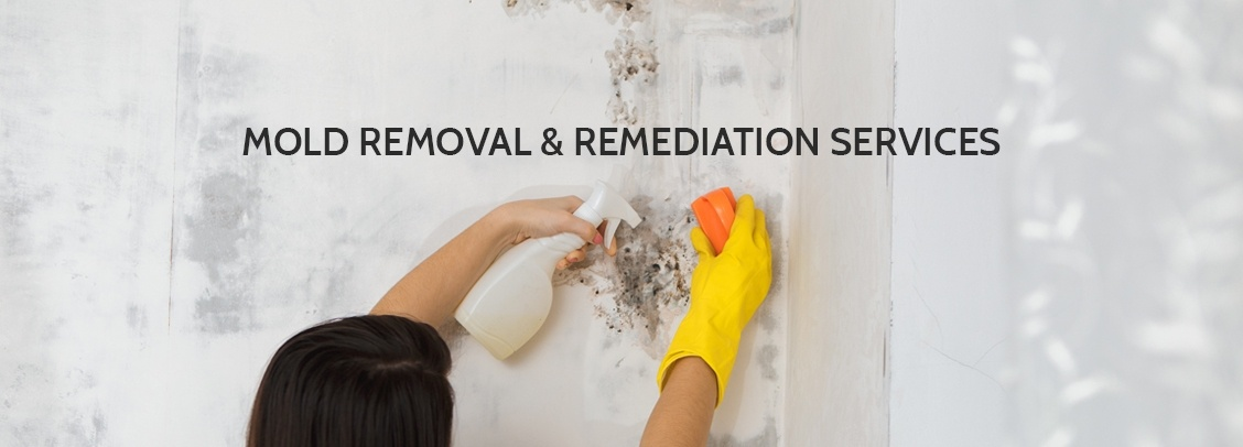 Mold Removal Beverly Hills
