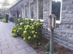 Assisted Living Residence Richmond Hill ON with Garden - Memory Lane Home Living Inc.