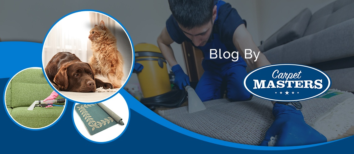 Blog by Carpet Masters