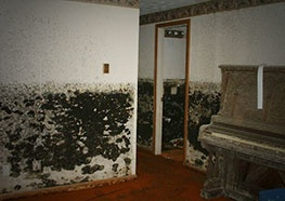 Mold Testing Chicago IL