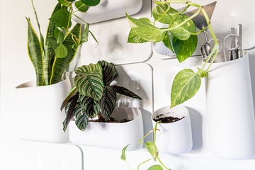 ADHD plants - Interior Design Kitchener by Lenore Brooks Design