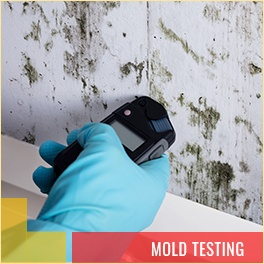 Mold Testing Salmon Arm