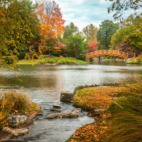 Nature in Autumn - Stress Relieving Art Photography Chesterfield by Coblitz Photographic Arts