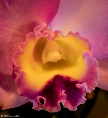 Beautiful Orchid Flower - Stress Relieving Art Photography St. Louis by Coblitz Photographic Arts