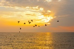 Birds Flying above River at sunset - Stress Relieving Art Photography Fenton by Coblitz Photographic Arts