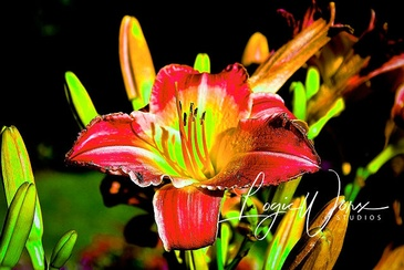 Lily - Photography Services Wasaga Beach by LogicWorx Studios Inc.