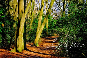 Old-Growth Forest - Photography Services Milton Beach by LogicWorx Studios Inc.