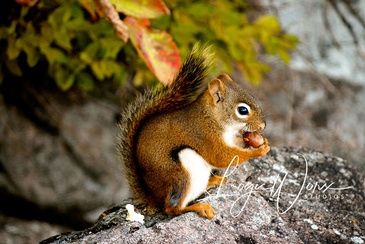 Squirrel - Photography Services Newmarket by LogicWorx Studios Inc.