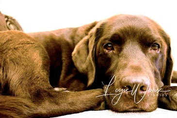 Cute Dog - Photography Services Orillia by LogicWorx Studios Inc.