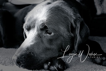 Dog - Photography Services Kawartha Lakes by LogicWorx Studios Inc.