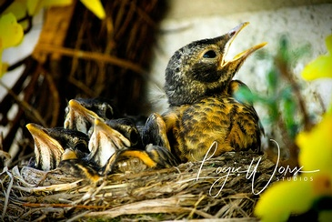 Nest - Photography Services Port Perry by LogicWorx Studios Inc.